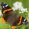 en_butterfly.png