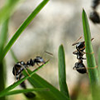 en_ants.png